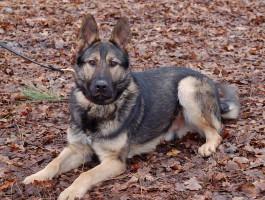 Honden bij ons in training - Combinatie