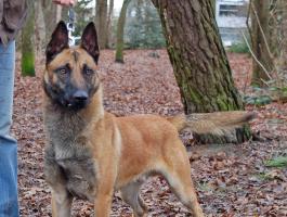 Honden bij ons in training - Dubbeldoel