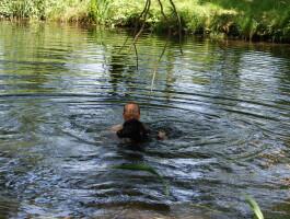 Zwemmen met de honden