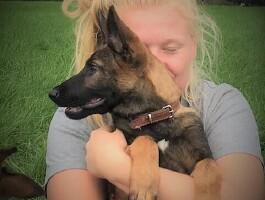 Honden voor particulieren en gezinnen.